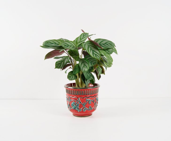 Bitossi Plant Pot, Red Mid Century Pottery, Flower Pot, Planters