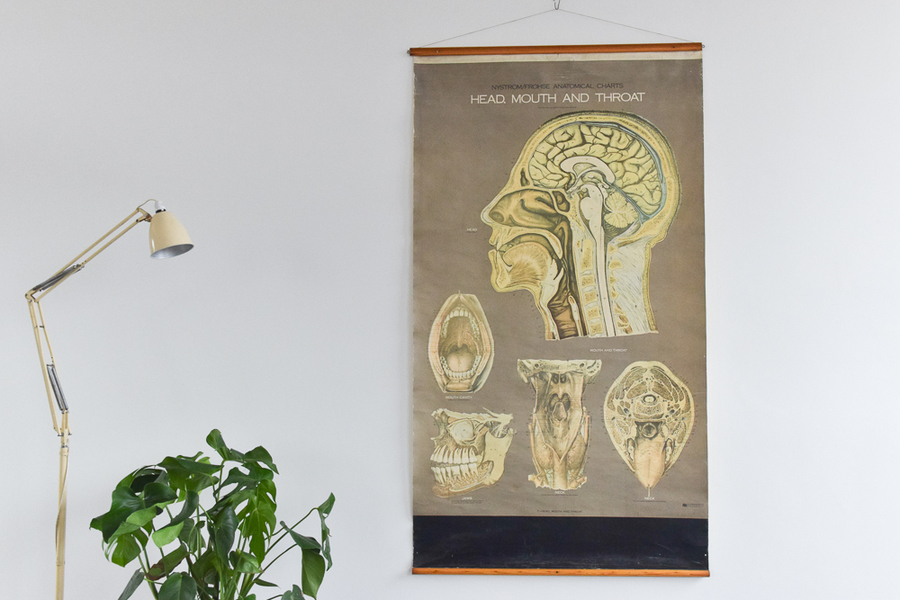 Vintage Large Human Head, Mouth And Throat Anatomical Poster Chart